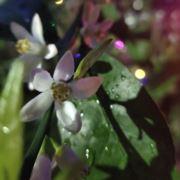 雪瓣是花朵的眠床