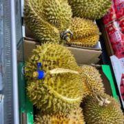 WX~169886518