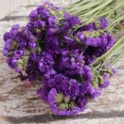 紫梦之悠悠