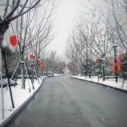 上虞玫瑰园1