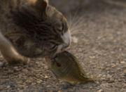 叮当猫不爱吃鱼